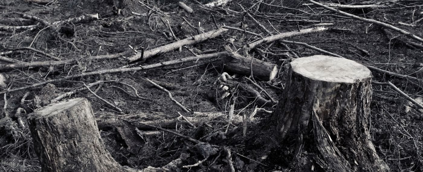 Маленькая победа: в Московской области по нашему запросу ищут черных лесорубов и ликвидируют свалку
